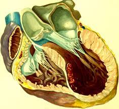 left ventricular